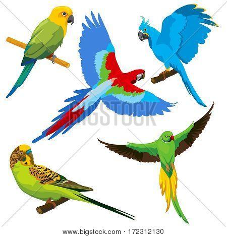 Cartoon parrots, tropical birds vector set. Exotic color parrot, animal cute tropical parrot illustration