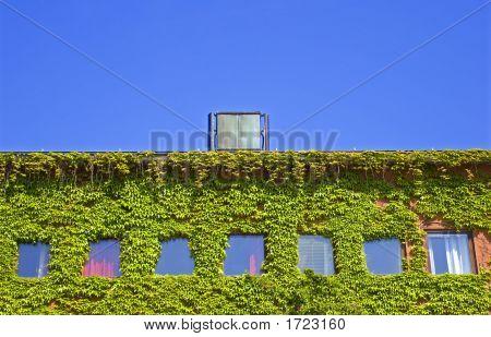 Ivy Building