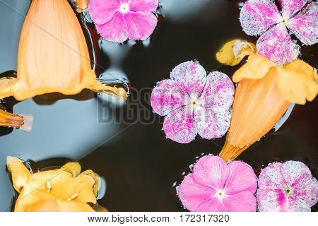 Closeup group of fallen pink and yellow flower float on water in basin for decoration in the garden textured background