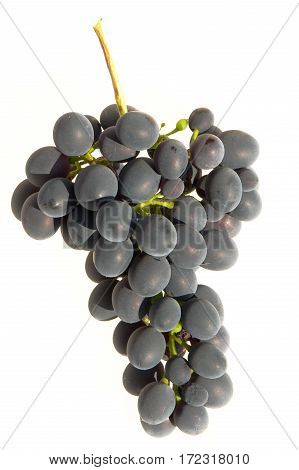 grapes black isolated on a white background