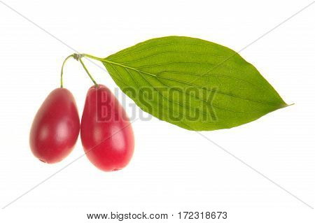 cornelian cherry with leaf on a white background
