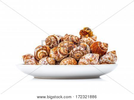 grilled spotted babylon shell on plate isolated in white background