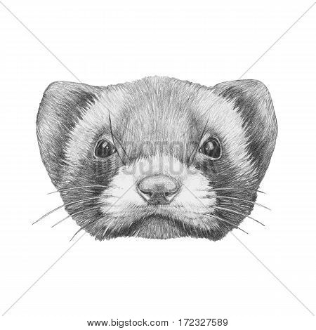 Portrait of Least Weasel. Hand drawn illustration.
