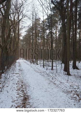 Forrest path through a pine forrest with light snow cover Germany 2017