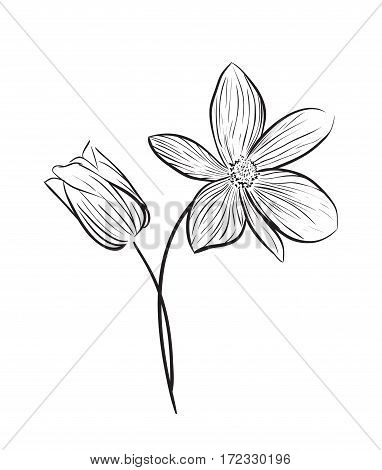 Wildflowers hand drawn outline style. Vector illustration