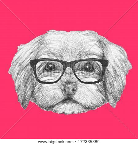 Portrait of Havanese with glasses. Hand drawn illustration of dog.