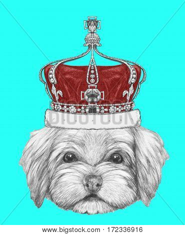 Portrait of Havanese with crown. Hand drawn illustration.