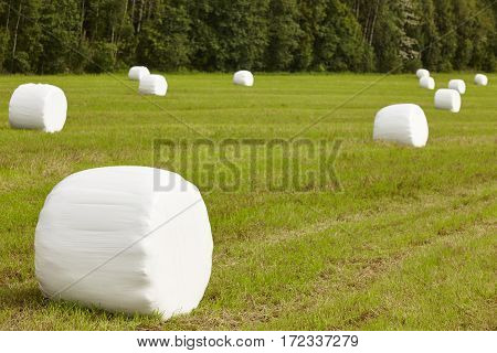 Packed fresh grass in the countryside. Norwegian landscape. Agriculture background. Horizontal