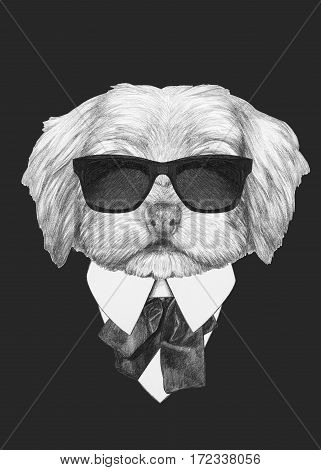 Portrait of Havanese in suit. Hand drawn illustration of dog.