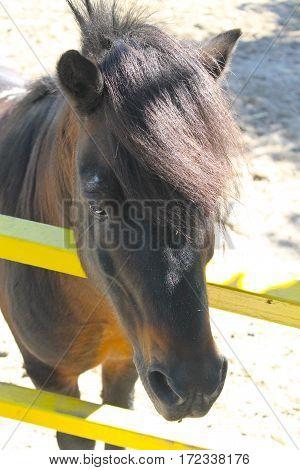 Pony in a paddock in a farmyard