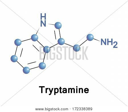 Tryptamine is a monoamine alkaloid. It contains an indole ring structure, and is structurally similar to the amino acid tryptophan. It is found in trace amounts in the brains of mammals