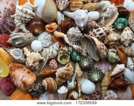 Close up photo collection of seashells colorful. Amazing background of sea shells top view.