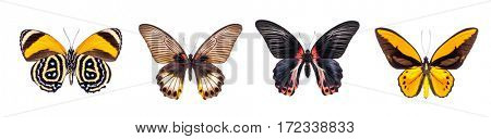 Set of four beautiful and colorful butterflies isolated on white.