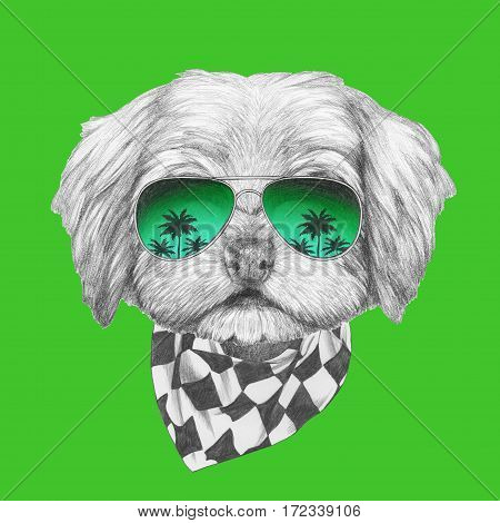 Portrait of Havanese with sunglasses and scarf. Hand drawn illustration of dog.