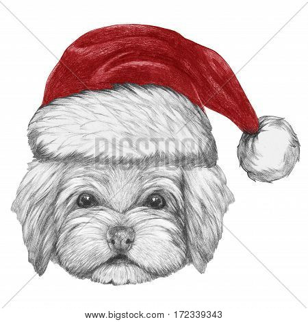 Portrait of Havanese with Santa Hat. Hand drawn illustration of dog.