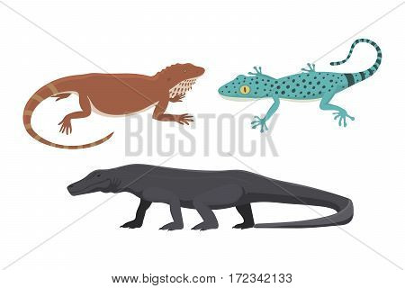 Different kind of lizard reptile isolated vector illustration. Wild cartoon nature dragon funny design. Reptile flat drawing body monster character.