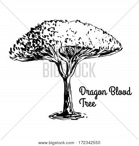 Vector sketch illustration. Black silhouette of Dragon Blood tree isolated on white background. Tropical flora. Dracaena Cinnabari, tree of Yemen.