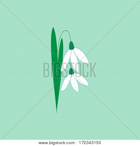 Snowdrop flower isolated. Illustration floret on green background. Cute delicate sign symbol spring. Colorful template for prints textiles wrapping wallpaper etc. Design element Vector illustration