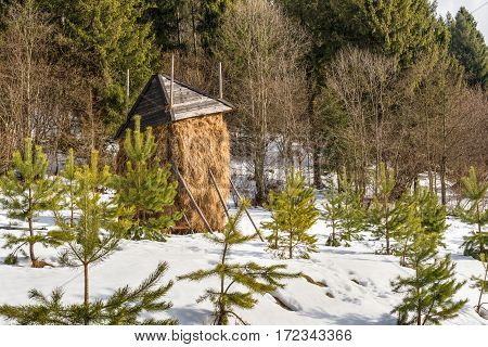 Winter landscape haystack hay the bulk of the hay early snow fabulous landscape winter magic snow white Firs in the snow cold frosty beautiful day straw in the Carpathian Mountains Ukraine.