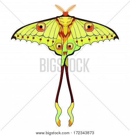 Butterfly Madagascar Comet Moth Moon. Vector Illustration