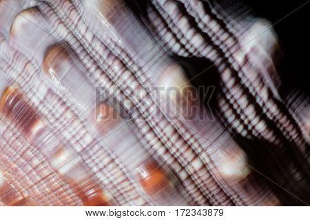 macro of texture of a marine seashell