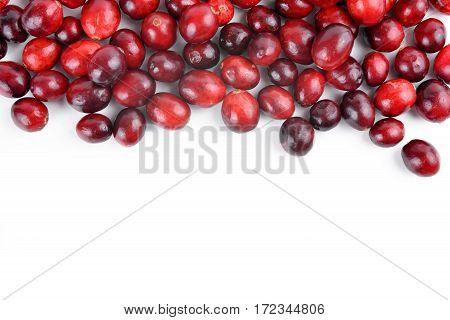 The tasty american cranberries ( Vaccinium macrocarpon ) on white background.
