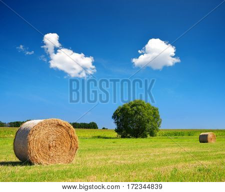 Straw bale on meadow with blue sky
