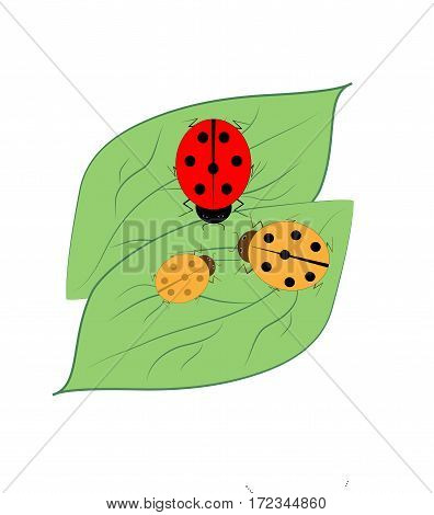 Ladybird isolated. Illustration ladybug on green leaf. Cute colorful sign red insect symbol spring summer garden. Template for t shirt apparel card poster Design element Vector illustration