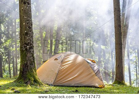 Camping Tent In Green Forest In Spring Sunny Morning With Fog Haze Among Trees. Recreation Concept.