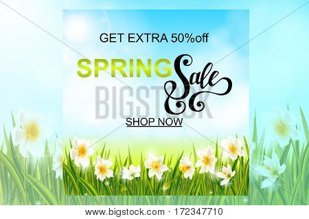 Spring sale banner, background with daffodil narcissus flowers, green grass, swallows, lettering and blue sky. Seasonal discount