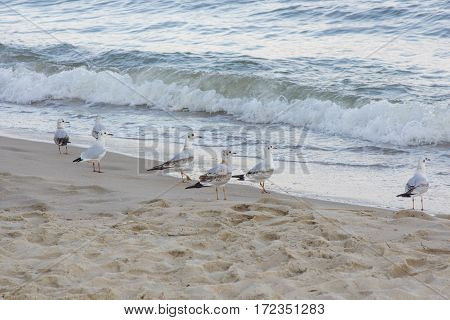seagull walking by the sea in summer