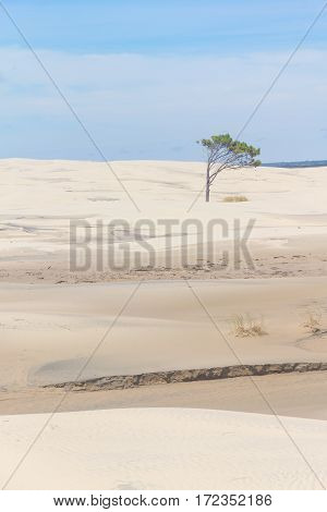 Tree On The Dunes At Lagoa Do Peixe National Park