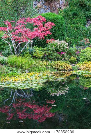 Amazing landscape and floral park Butchart Gardens on Vancouver Island. In a small pond, overgrown with lilies, reflected trees and flowers