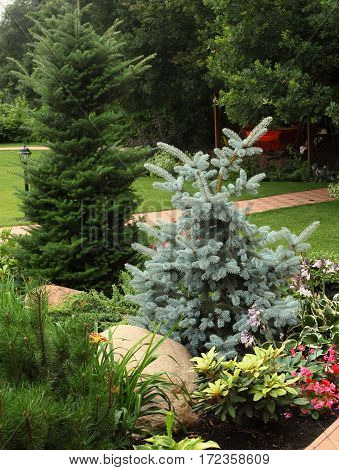 Blue Spruce Tree In European Formal Garden