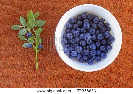 Close up photo of blueberries on the plate. Fresh ripe juicy bilberries bright autumn colorful background. Concept for healthy diet with berries. Selective Soft focus