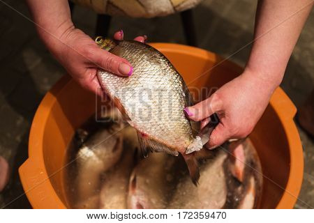 Female hands with manicure with a knife in her hands clean hulls from river fish. Carve fish. Cook food