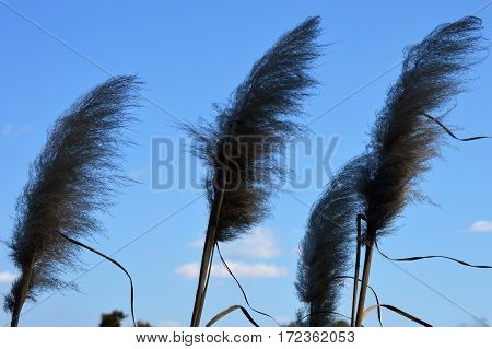 horizontal shot of marsh grass blades with wind