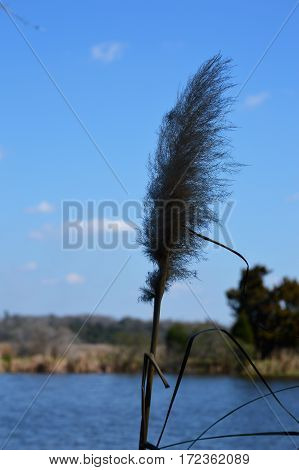 vertical shot of single blade of marsh grass