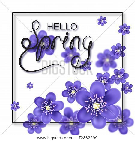 Hello Spring letter decorating with Hepatica flower. Seasonal lettering decoration with blur effect. Vector illustration.