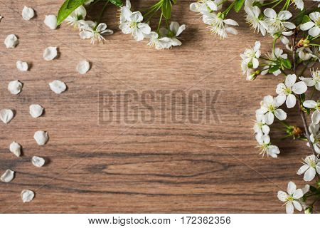 Frame of white flowering cherry branch on wooden background.