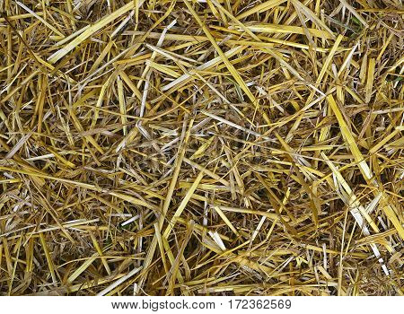 Natural background from dry straw and hay.