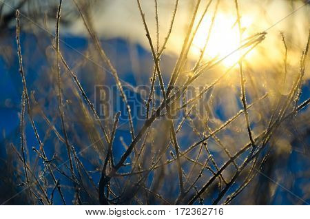 Blurry winter forest with bokeh effect. background with snow and lights.