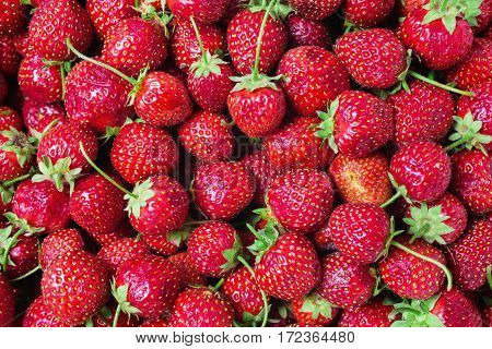 Background from a red ripe strawberry. Summer ripe berries