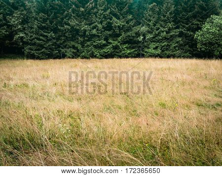 Forest trees and meadow, simple natural background backdrop, without sky, nearly just duo chrome or duotone, two-thirds, big copy space. low contrast in warm tones