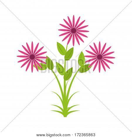 daisy flowers bunch flora vector illustration eps 10