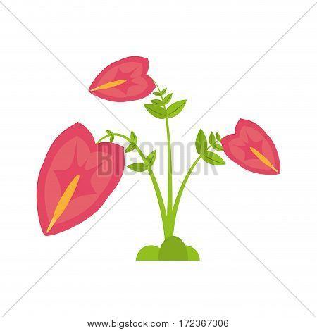 anthurium leaf plant exotic vector illustration eps 10