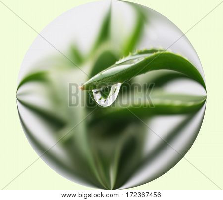 Aloe Vera Plant Inside A Sphere High Quality