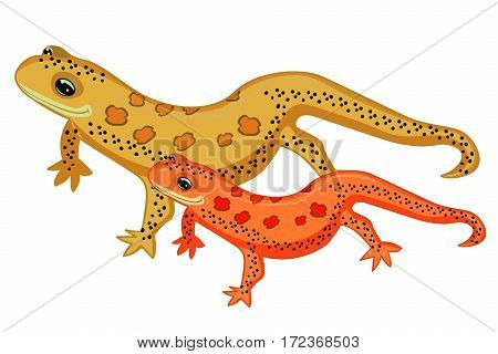Triton East American Red Spotted Salamanders Smiling. Vector Illustration
