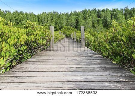 Wooden bridge walkway mangrove forest in Thailand