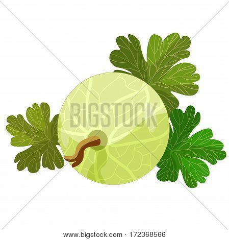 Card With Gooseberries With Leaves. Vector Illustration